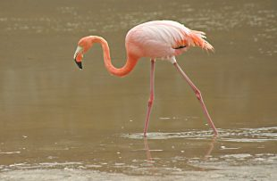 flamingo-freeimagesq